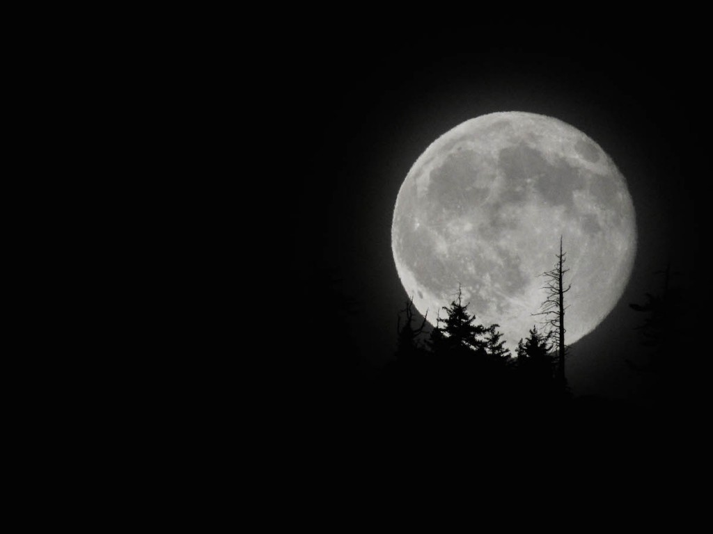 Daren--high-moon-1-of-1_1440785251
