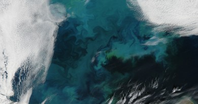Florecimiento de fitoplancton en el Mar de Barents
