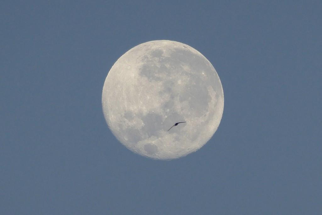Peter-Lowenstein-Swift-Moon-Mutare-Zimbabwe_1448622974