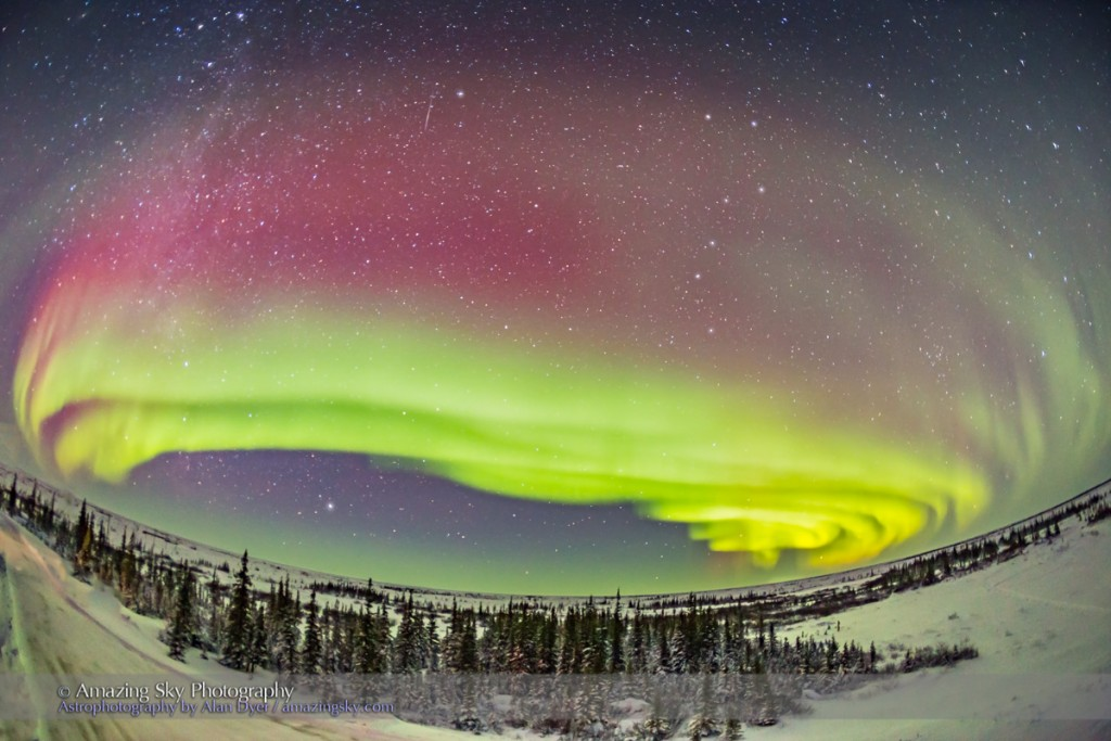 Multiple curtains of aurora appear along the curving arc of the auroral oval over the boreal forest. This is looking just a little east of due north from the second floor deck of the Churchill Northern Studies Centre, Churchill, Manitoba. Polaris is just left of top centre, with the Big Dipper at right of top centre. A meteor streaks to the left of Polaris. Vega is at lower left as a circumpolar star low in the north. The curtains appear more yellow toward the horizon due to atmospheric absorption. The curtains display the classic green tint with red upper fringes, both from transitions in oxygen.  This is how the Lights usually begin from this latitude under the auroral oval. They will then move up and south from this formation to cover the sky.  This is a 20-second exposure at f/2.8 with the 15mm full-frame fish-eye and Canon 6D at ISO 3200.