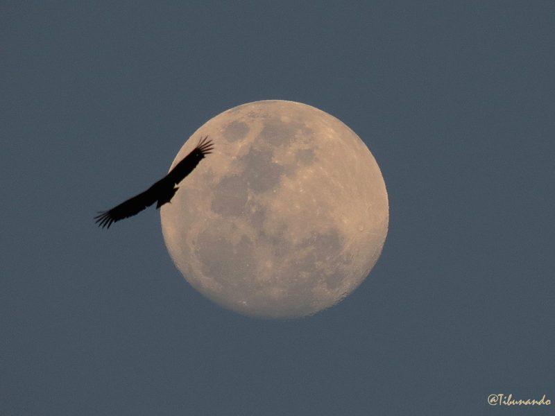 La Luna desde Caracas, Venezuela
