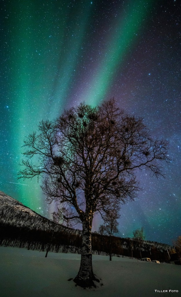 Truls-Tiller-auroratree_1456913936