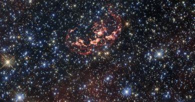 La búsqueda de sobrevivientes en una explosión de supernova