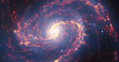 La gran diversidad de guarderías estelares en galaxias cercanas