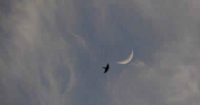 La Luna captada al atardecer en Yunquera, Málaga